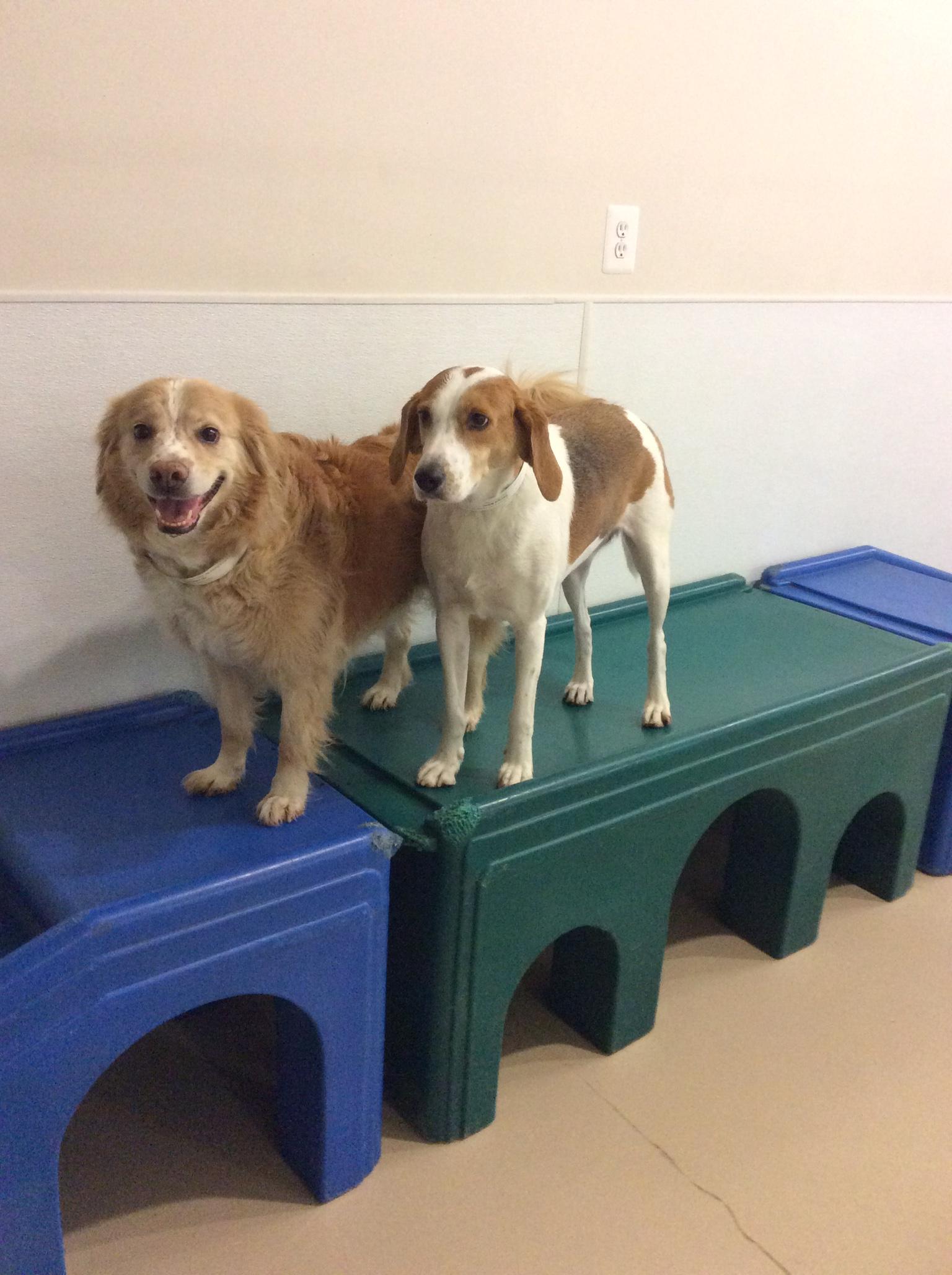 Blue Dog Boarding Daycare Kensington Md