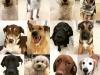 Dog Daycare Kensington