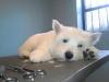Dog Grooming Kensington