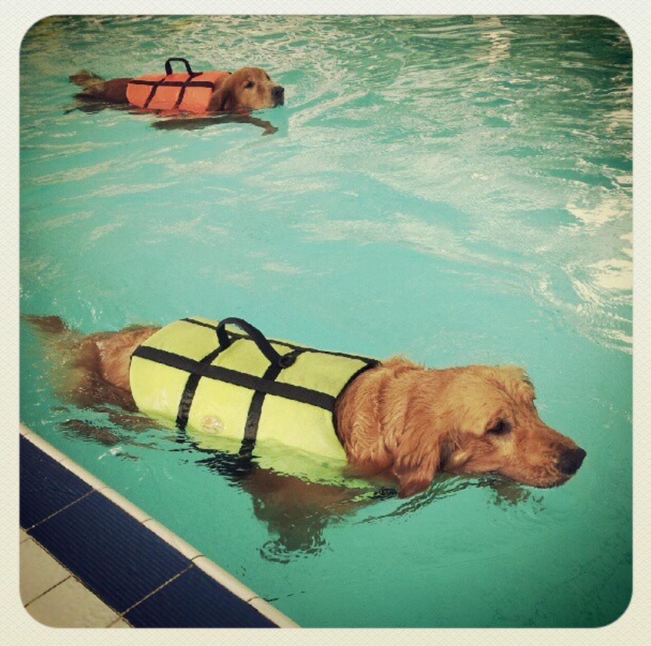 blue dog daycare