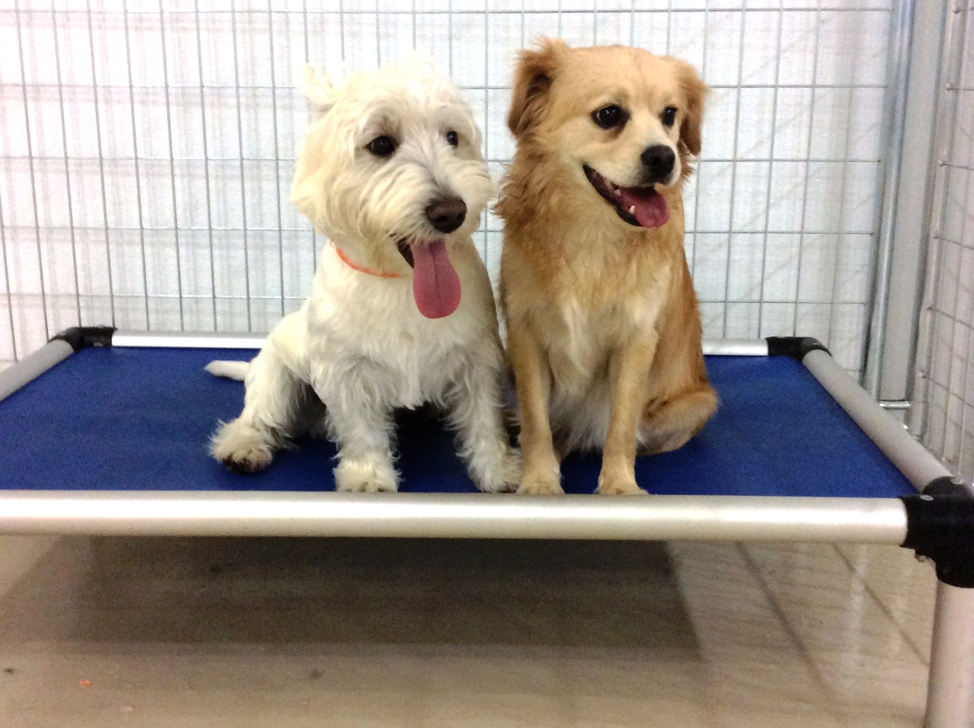 Dog Day Care Chandler Az