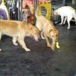 5 Benefits of Dog Daycare